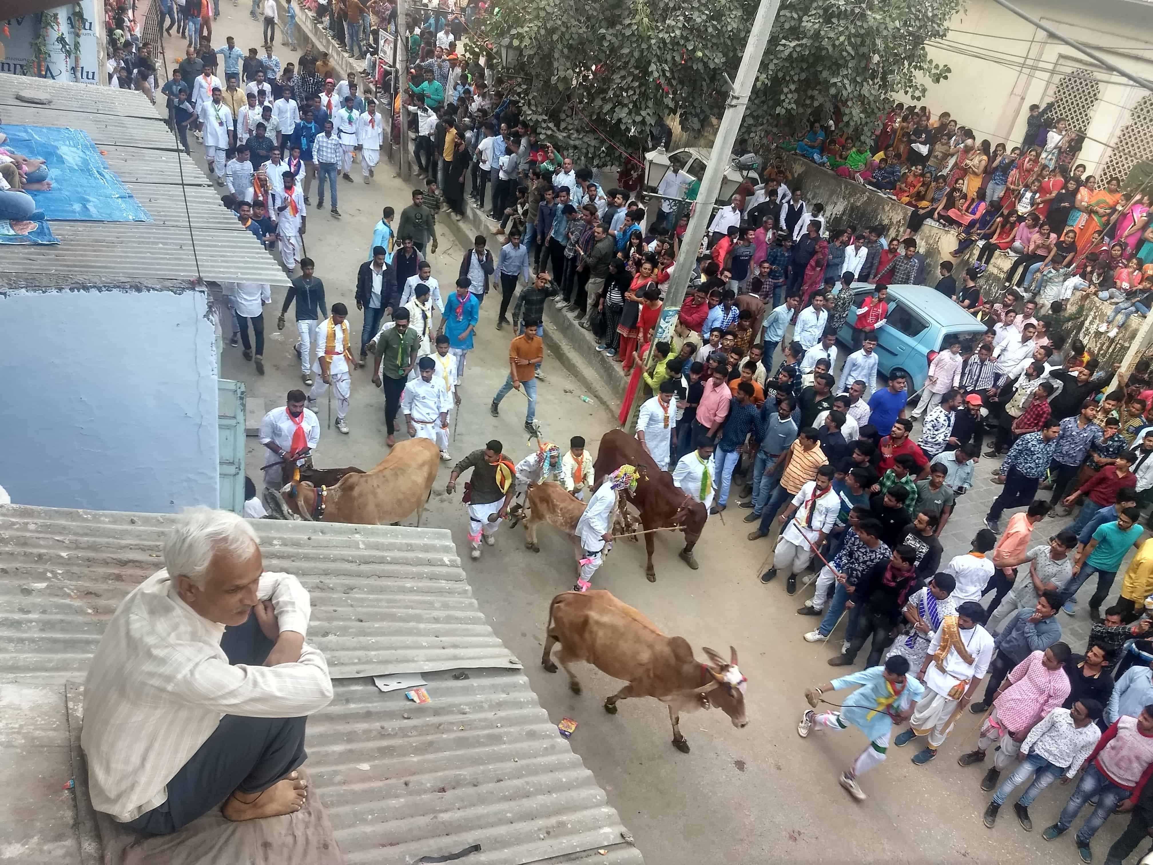 Goverdhan Pooja Nathdwara Khekhra Cows