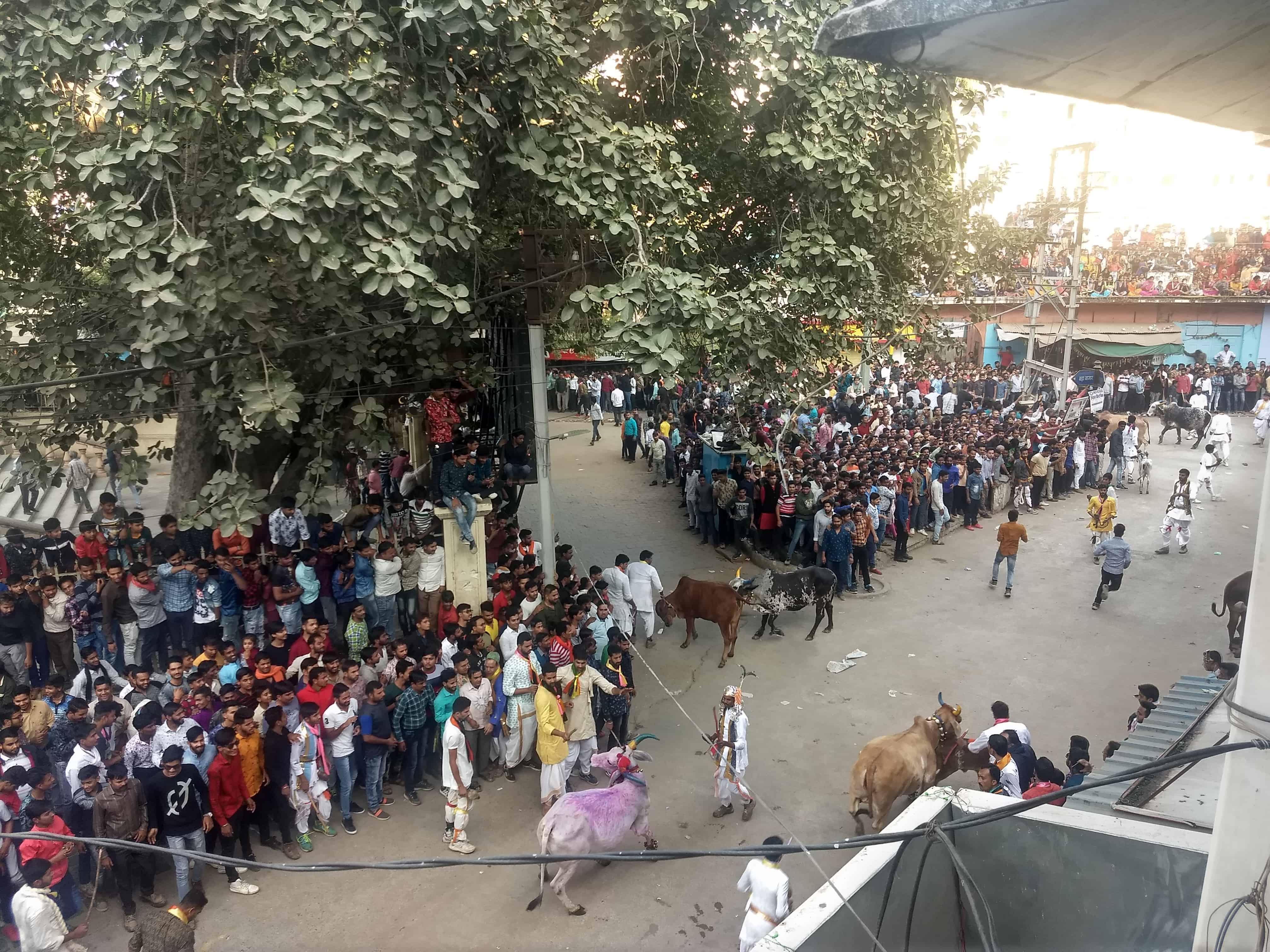 Khekra India Festival Celebration