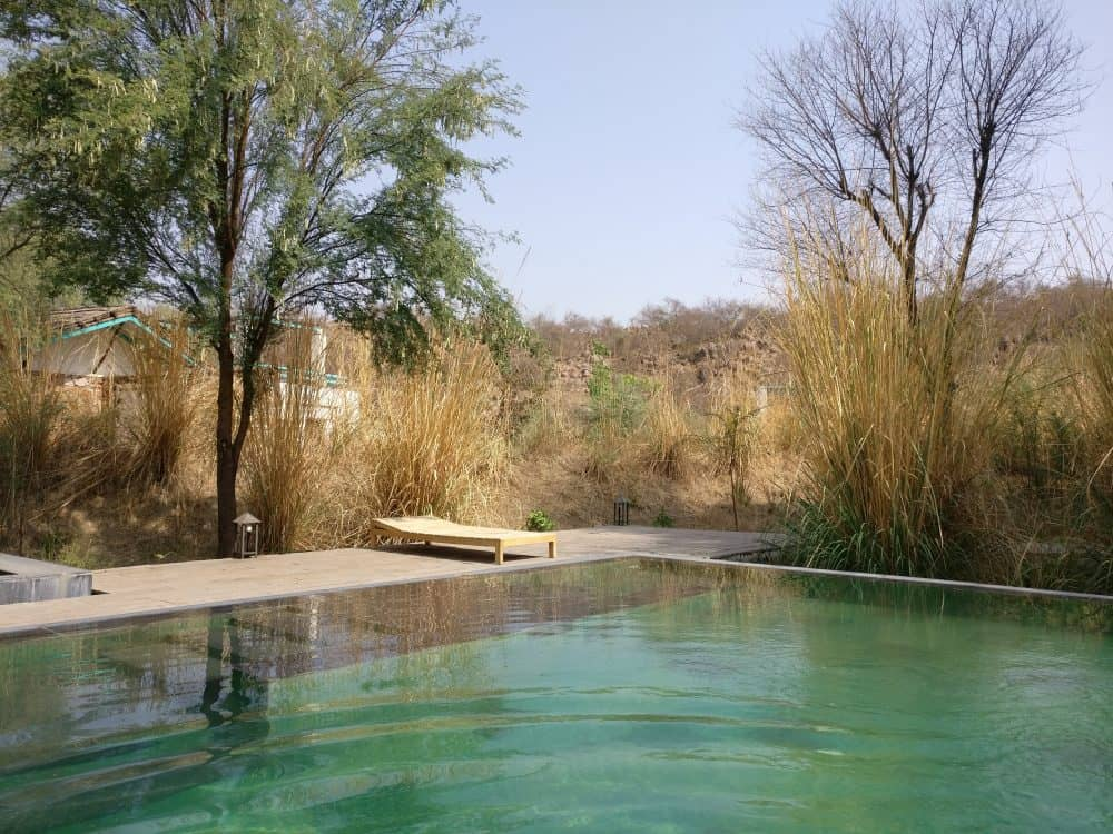 Trees & Tigers Wildlife Resort (Sariska)