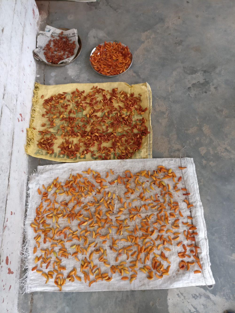 Grandma's House And Her Apricot Orchard Mukteshwar 3