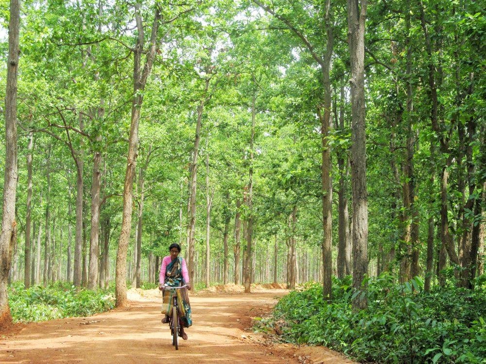 Joypur Forest Bankura West Bengal