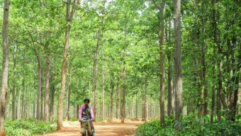 Joypur Forest Bankura West Bengal