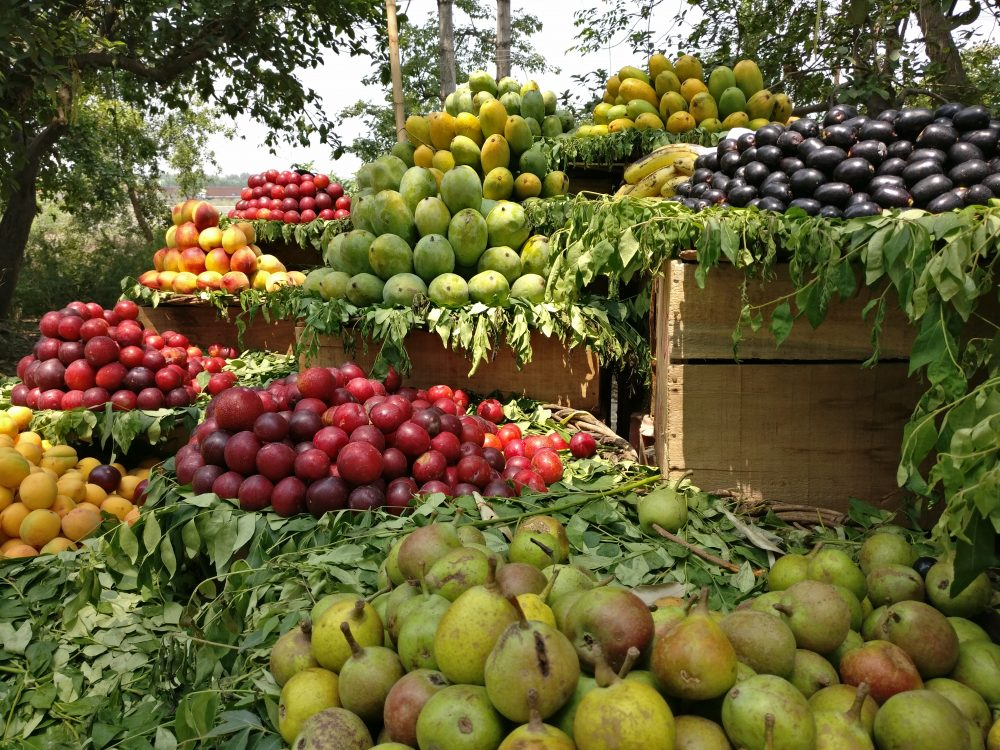 Pick Fruits From The Fruit Stand Mukteshwar