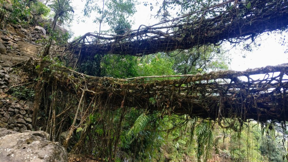 Living Root Bridges Northeast Indian