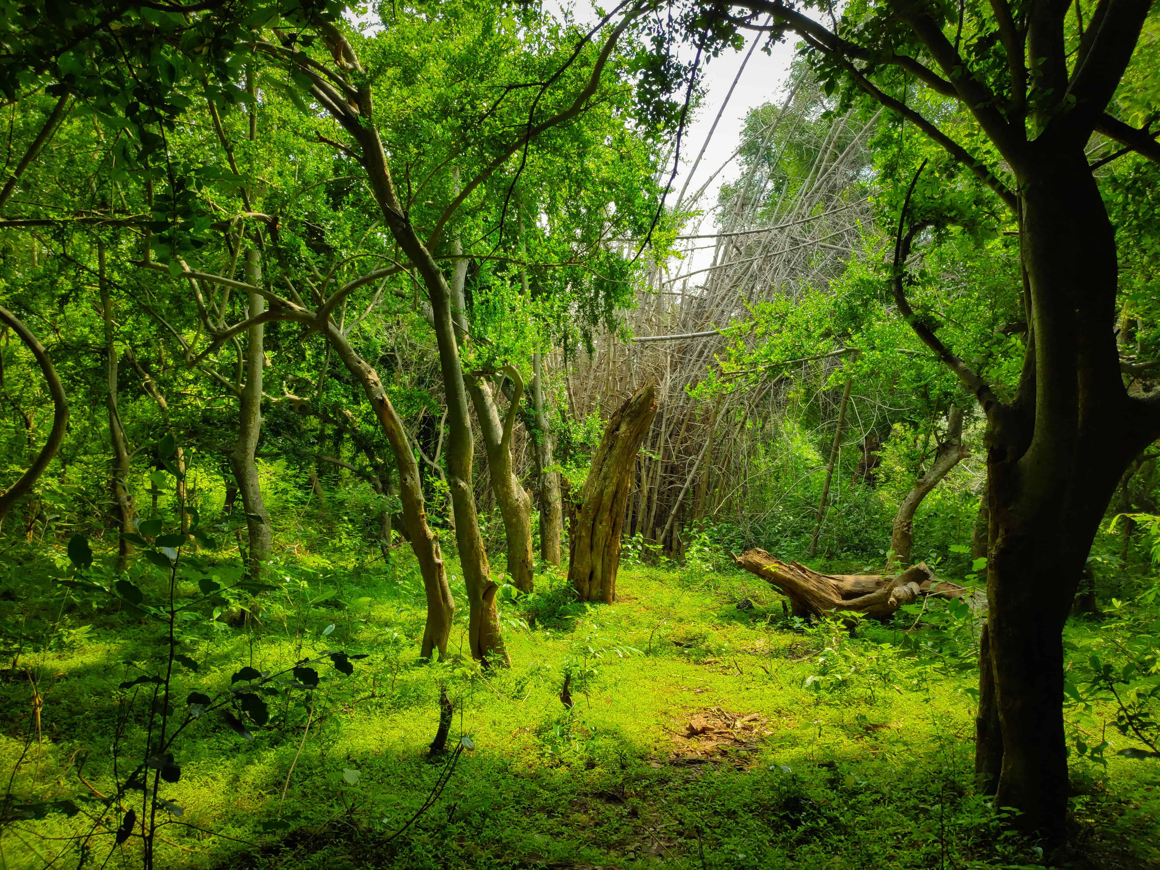Jawadhu Forest Hills