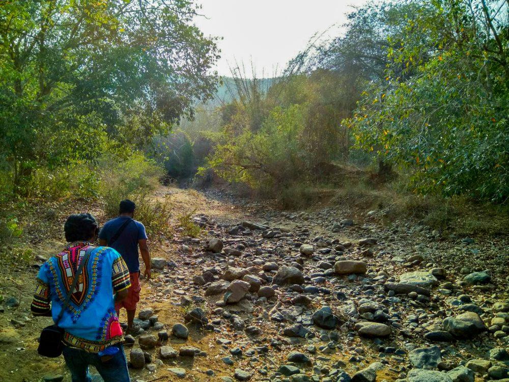 Jawadhu Forest Morning Hike 1