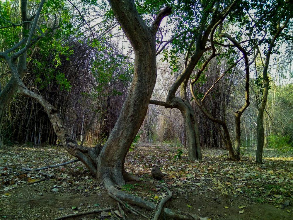 Jawadhu Hills Forest Bamboo Bushes