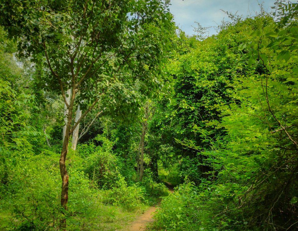 Jawadhu Hills Forest Hiking Trail