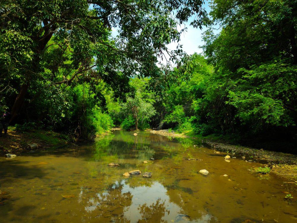 Jawadhu Hills Forest Water Stream