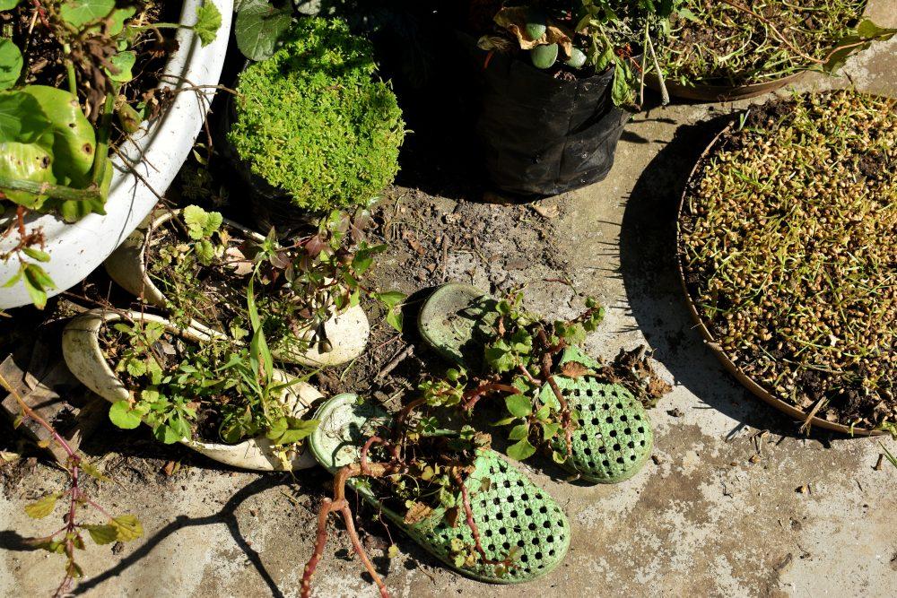 Upcycled Gardening
