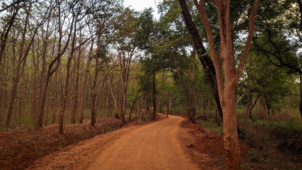The Forest Road Towards Harangi Backwaters
